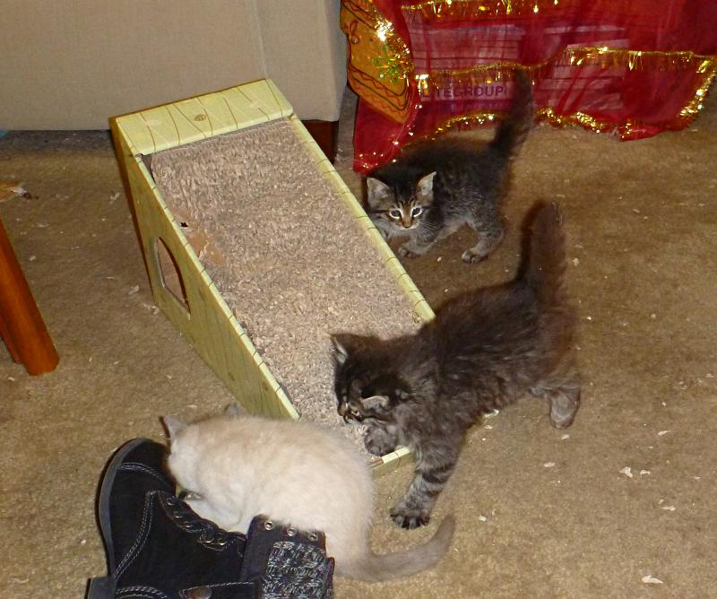 Kittens-on-floor-26jan