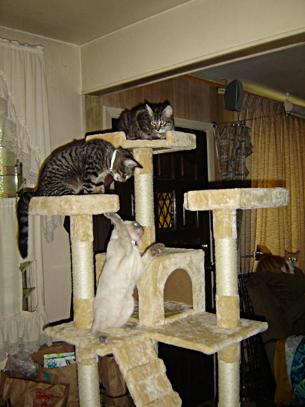 Cat-rack