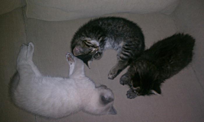 IMAG0322-tired-kittens-on-sofa