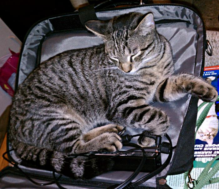 IMAG0411-huckleberry-in-laptop-case
