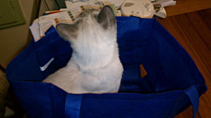 IMAG0412-southmoon-in-shopping-bag
