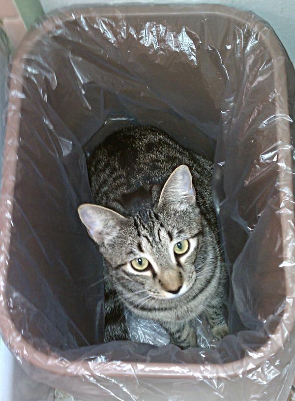 IMAG0426-huckleberry-in-wastebasket