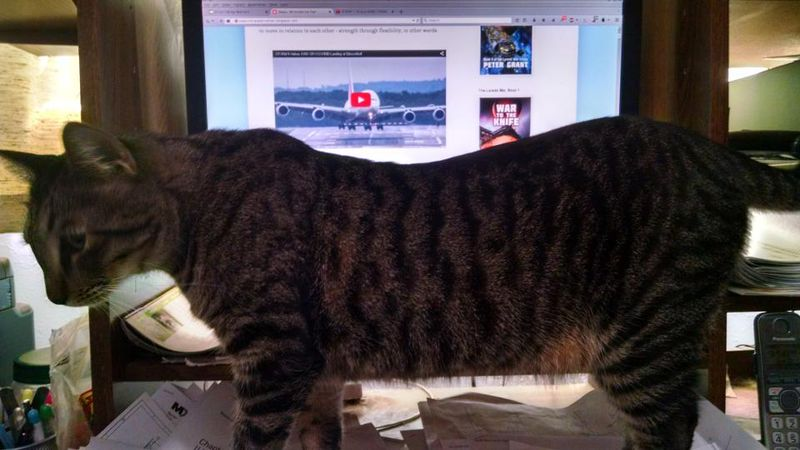 Huckleberry at desk, eclipsing monitor