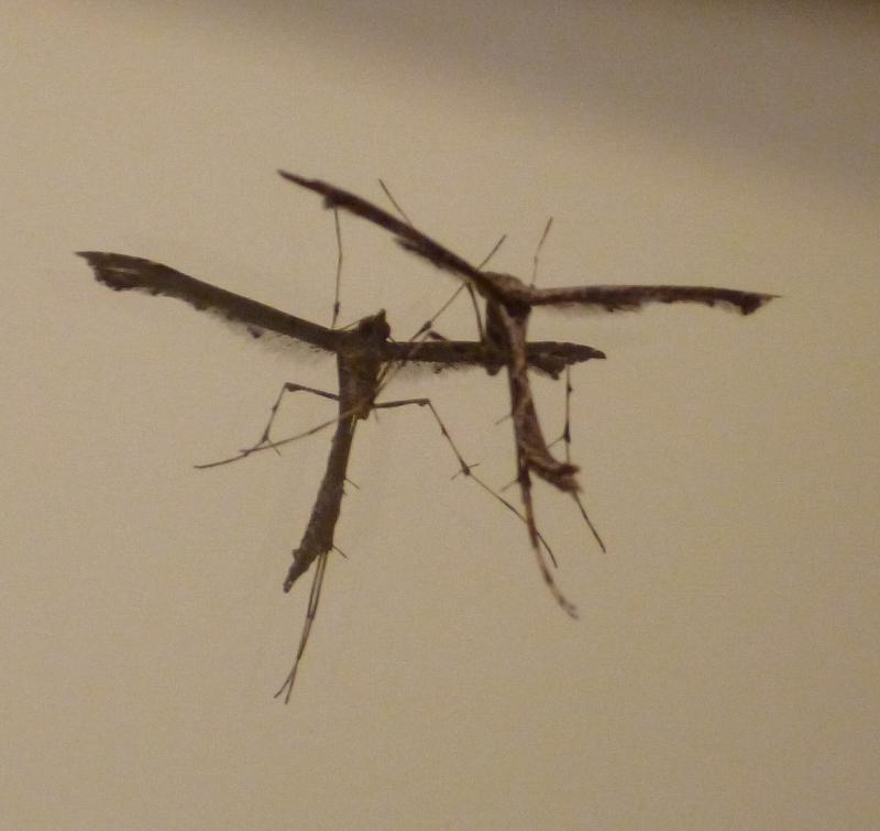 Gothic-mosquito-2