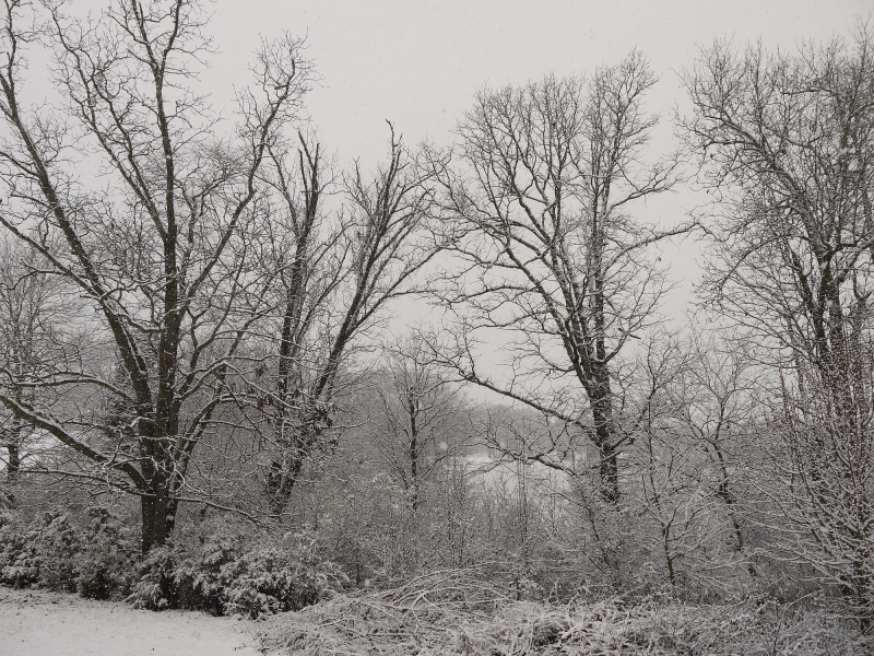 Backyard trees 1