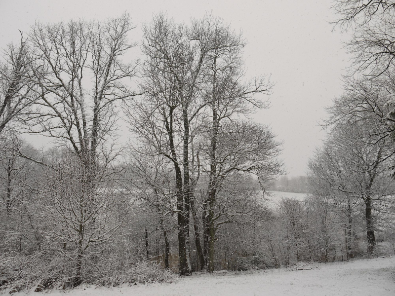 Backyard trees 2