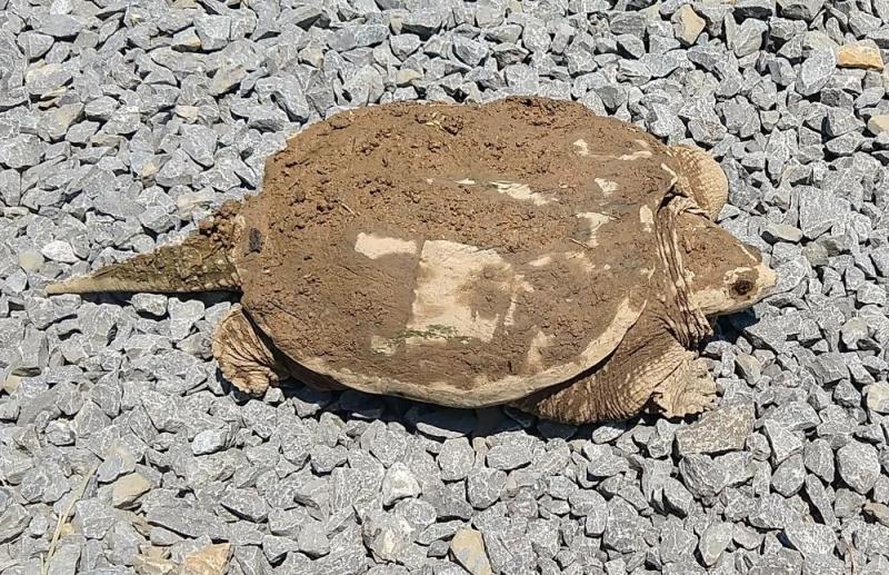 Turtle 2020 Jun 13
