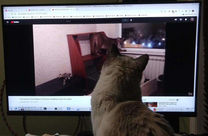 Southmoon watching Bobcat TV