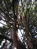 p8210023-big-tree