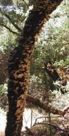 p8210024-tree-fungus